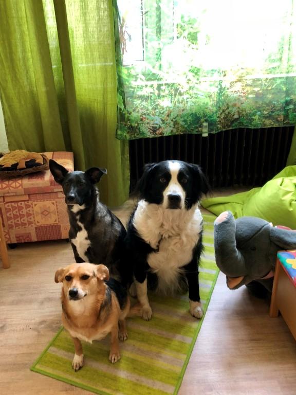 Hunde im Büro, Therapiehunde bei logobile, logopädischer Praxisgemeinschaft Broekmann & Schrödter-Worm GrR, Logopädie in Castrop-Rauxel, Sprachtherapie in Castrop-Rauxel